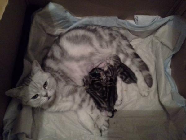 Ami mit ihren Babys