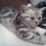 Bella mit 6 Wochen