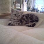 Bella mit ca. 7 Wochen