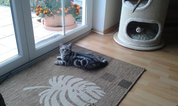 Bahamut alias Bruno im neuen Zuhause